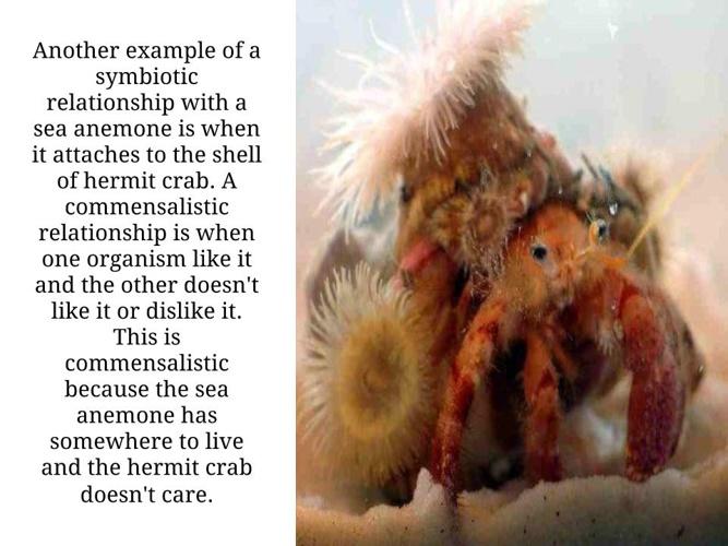 Sea Anemone - Arianna Stadler