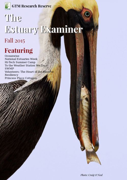 GTM Research Reserve: The Estuary Examiner