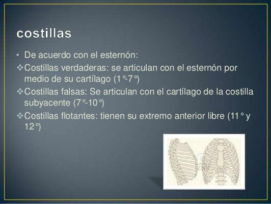 presentacin-torax-4-638