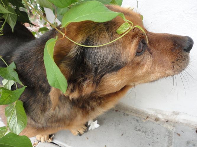 Mentira, un perro romántico