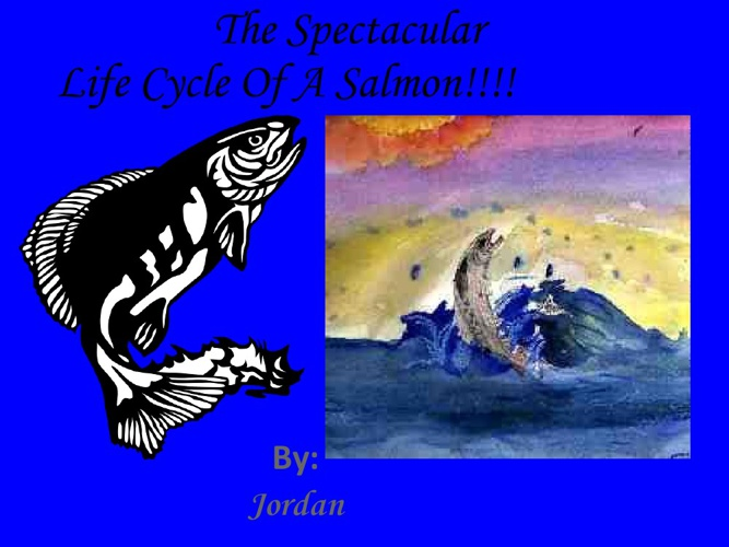 The Spectacular Life Cycle of A Salmon