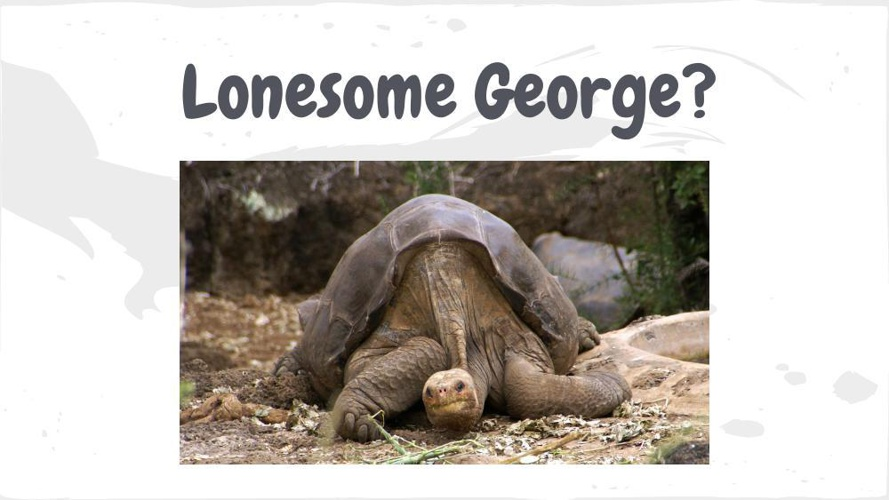 Lonesome George for Flip Snack