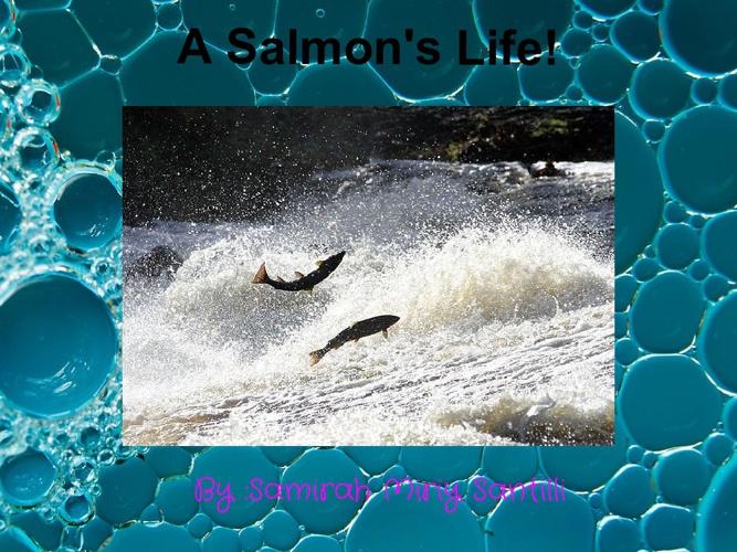 A Salmon's Life!