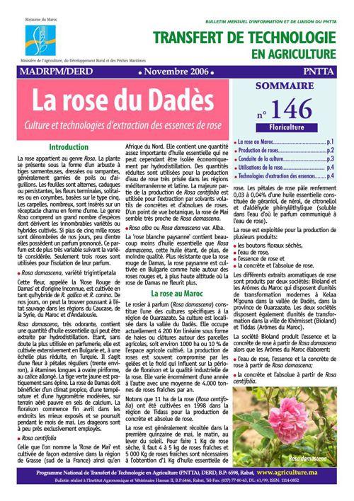 La rose du Dadès