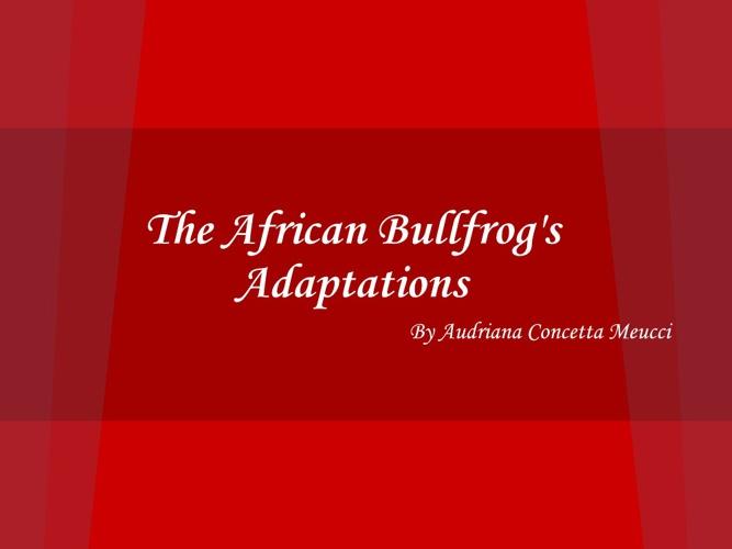African Bullfrog;s Adaptations