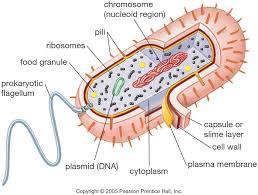 Prokaryotic