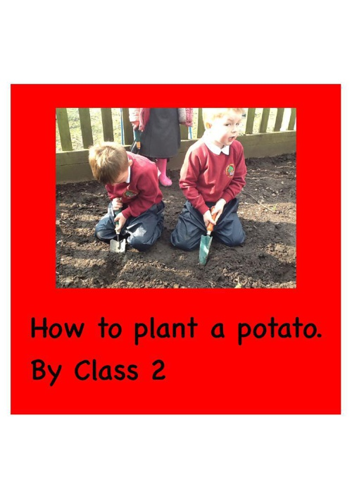 How to plant a potato