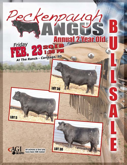 Peckenpaugh Angus Annual 2-Year-Old Bull Sale