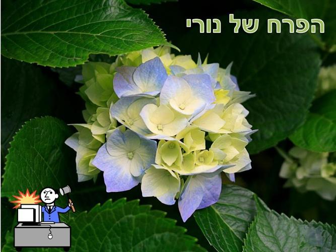 הפרח של ניר
