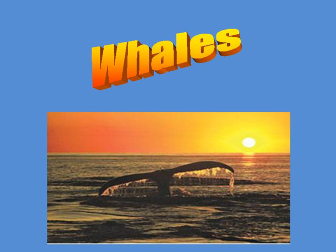 Power Point Whale