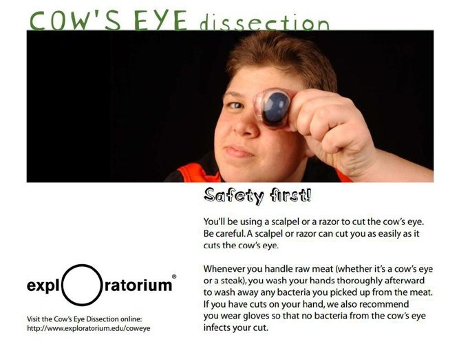 B1d - Eye dissection