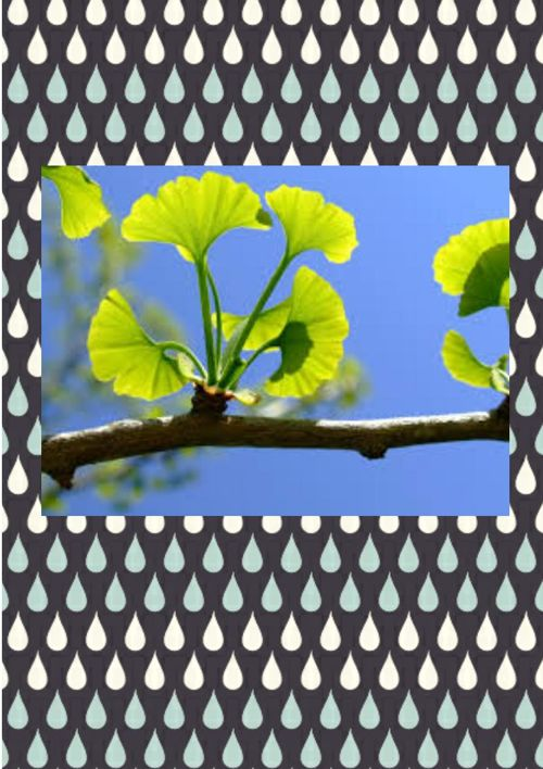 Gingko Presents- Plant classes