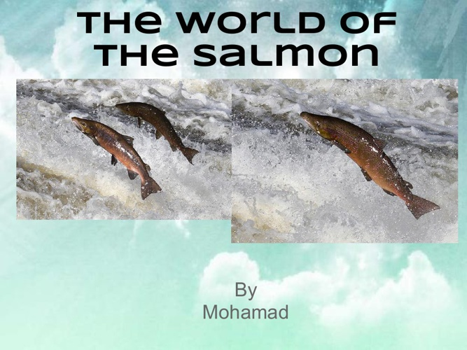 The World Of The Salmon