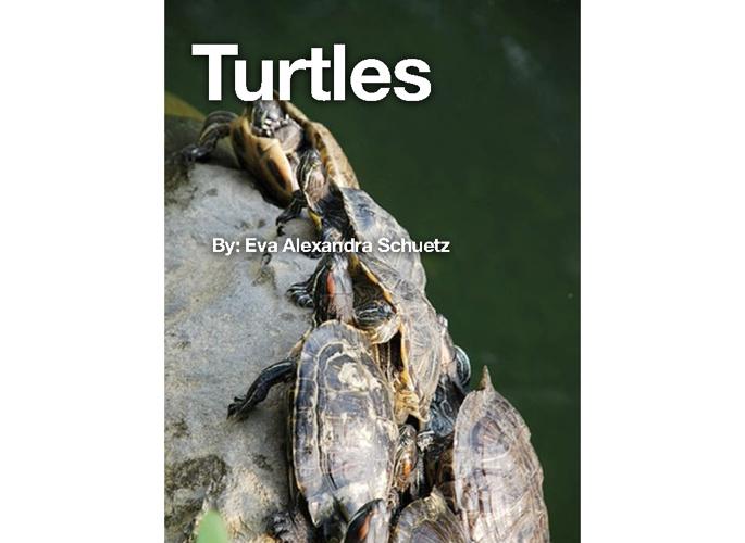 My Turtle Anthology