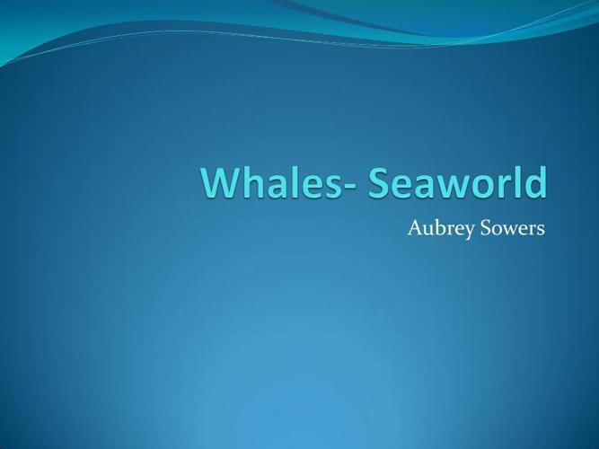 Whales- Seaworld
