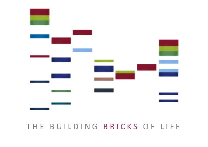 The Building Bricks of Life