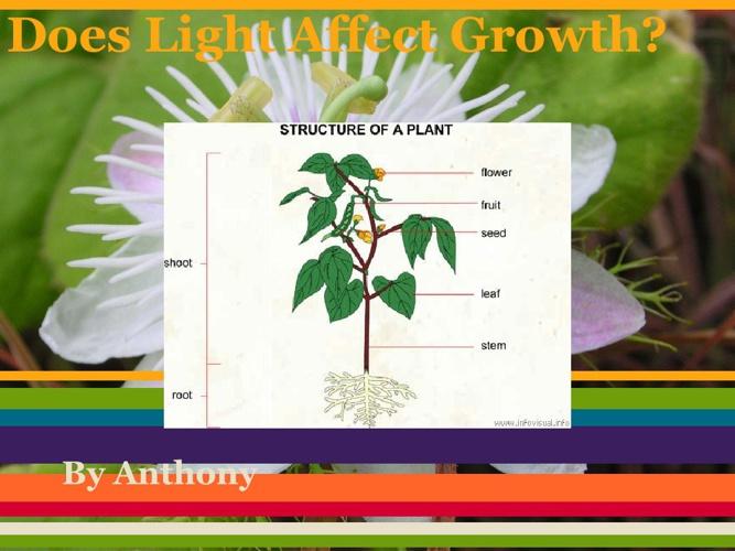anthonyplant