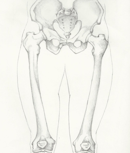 Anterior and Medial Thigh FlipBook