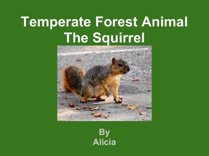 Alicia Squirrel