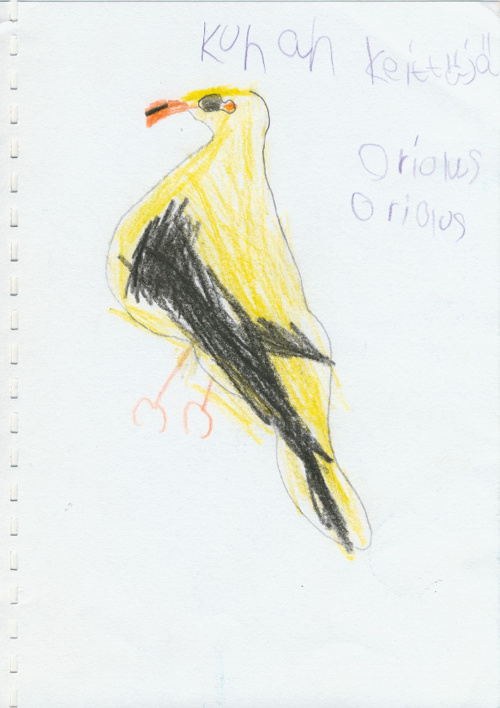 Birds from Finland 1.