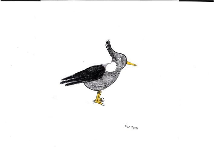 Weidevogels ecolinetekeningen deel 1