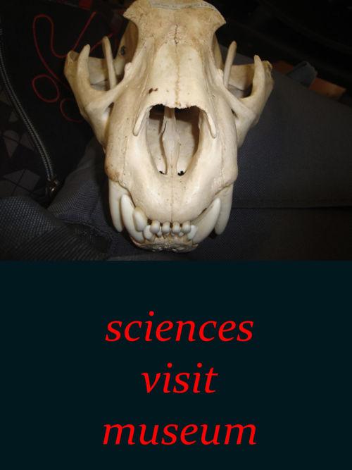 Sciences Visit Museum Julian Roa.