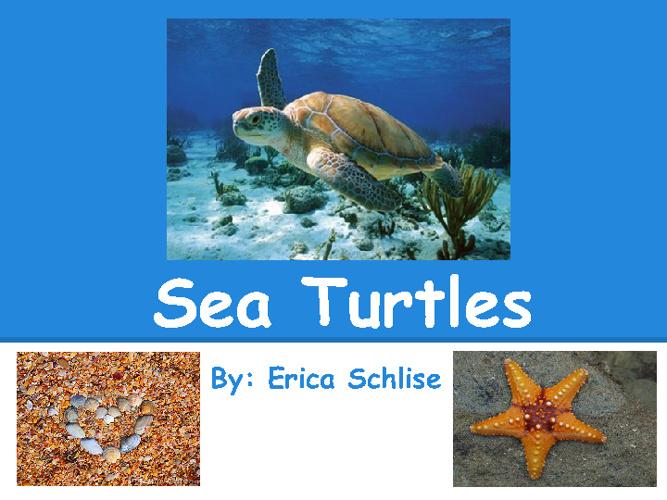 Erica's Sea Turtle Project