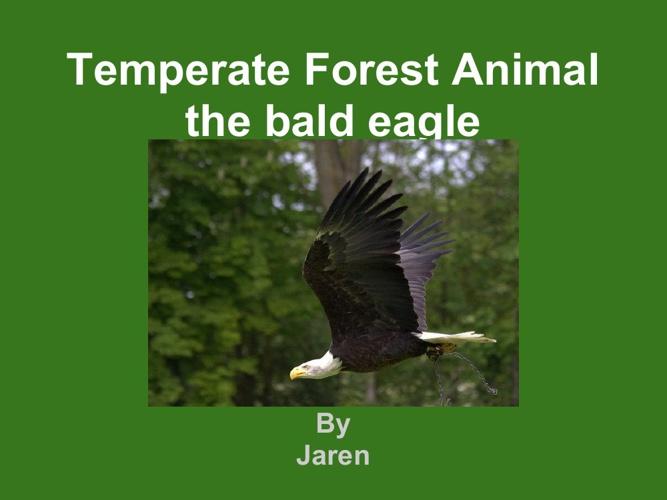 Jaren bald eagle