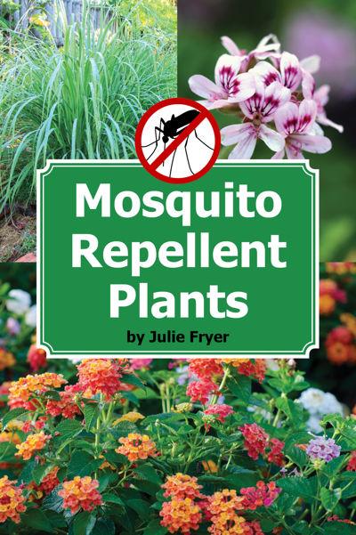 Mosquito Repellent Plants
