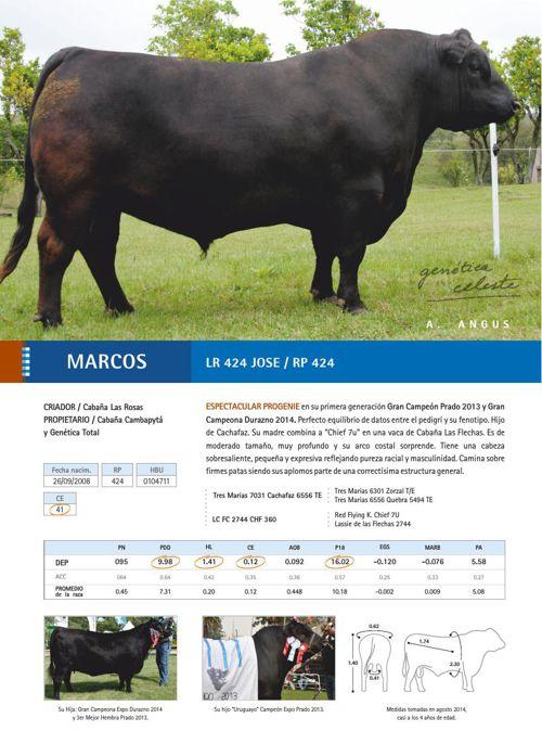 Catálogo FERTIGEN 2015 - raza A. Angus
