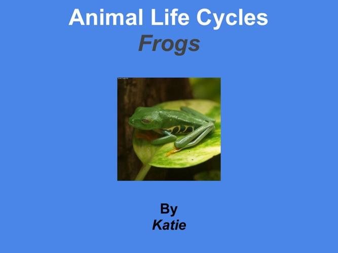 katie frogs