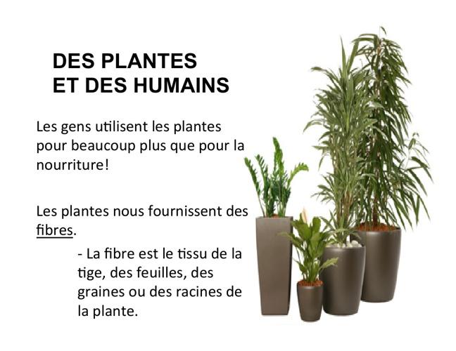 Des plantes et des humains