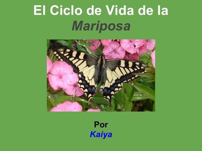 Kaiya mariposa