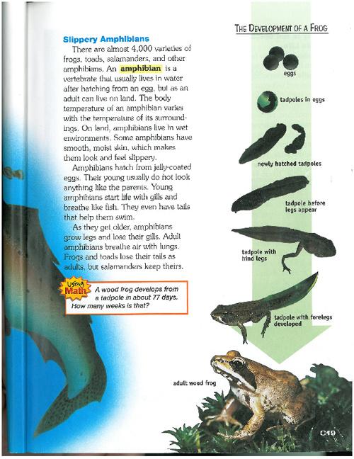 Amphibians All Around
