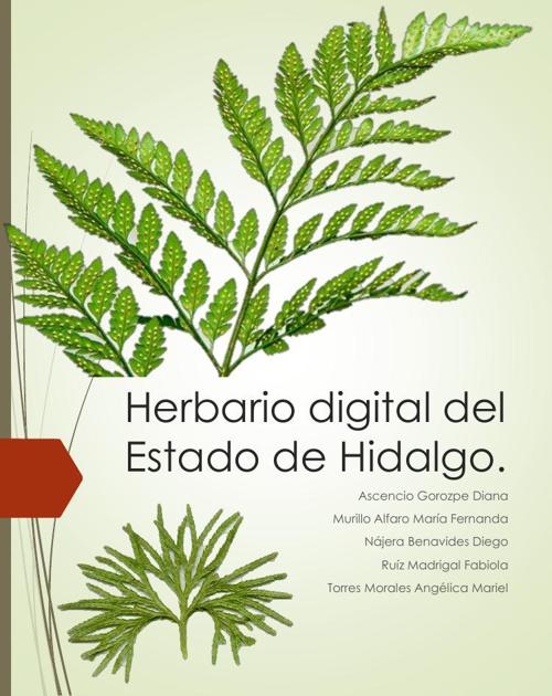 Herbario digital del Estado de Hidalgo