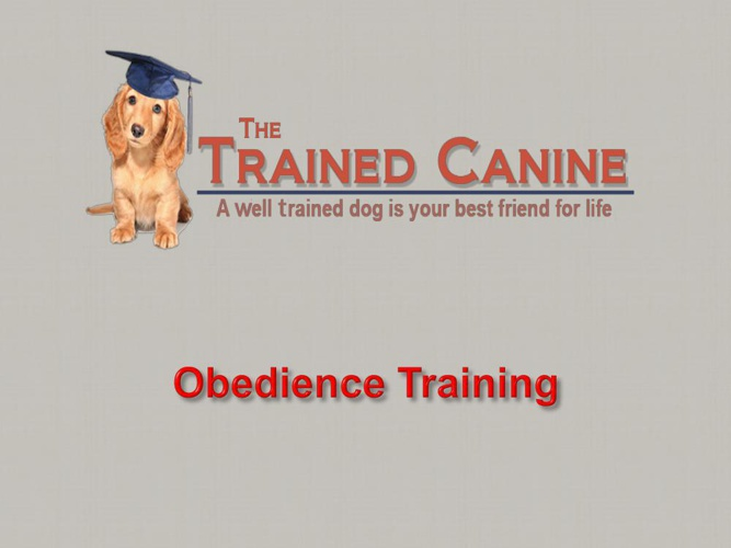 In Home Dog Training New Jersey