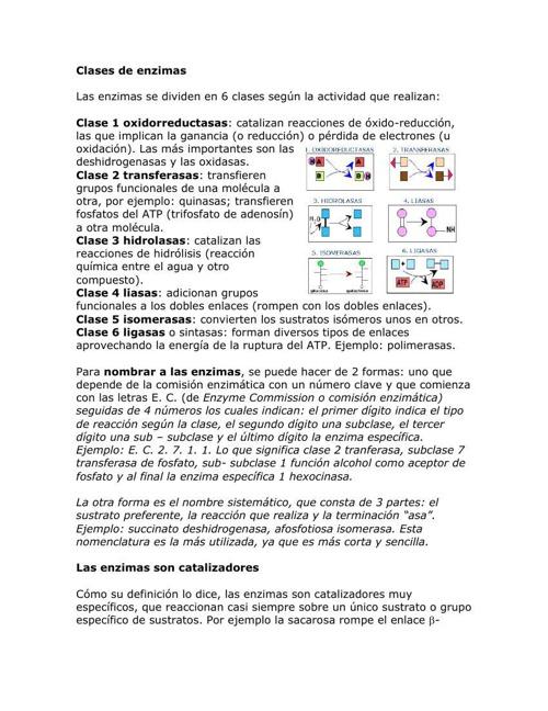 Clases de enzimas