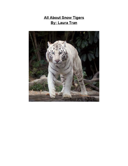 All About Snow Tigers