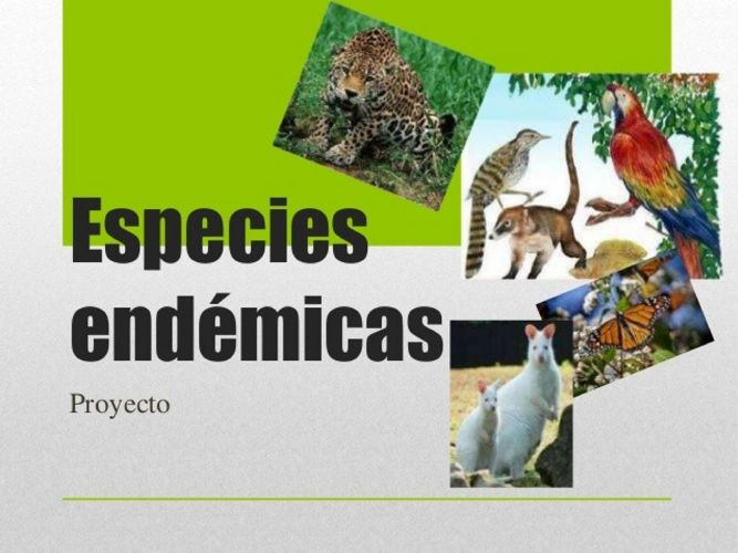 Especies endemicas Colombianas