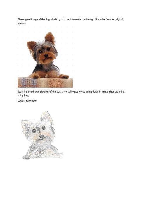 image resolution dog