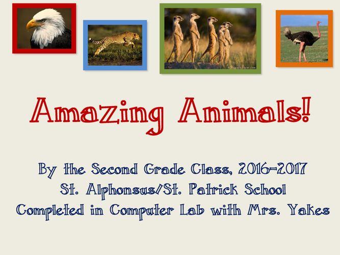 Amazing Animals 2016-17