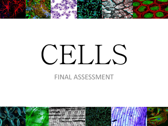 Cells: Final Assessment