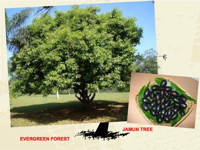 Maharastra Forest Wealth