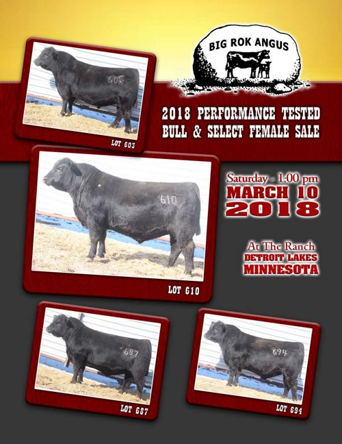 Big Rok Angus 2018 Performance Tested Bull & Select Female S