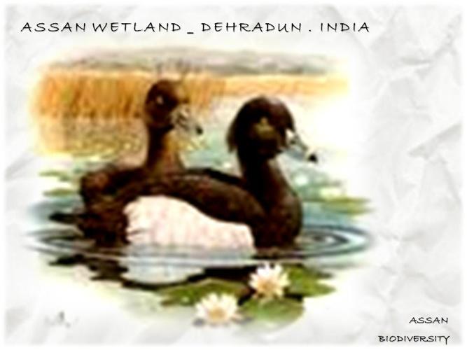 Aasan Wetland