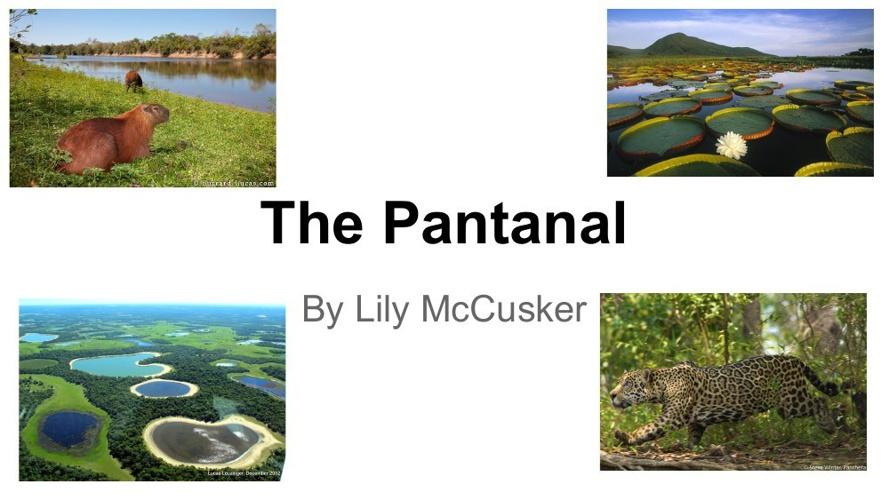 the Pantanal - Brazil