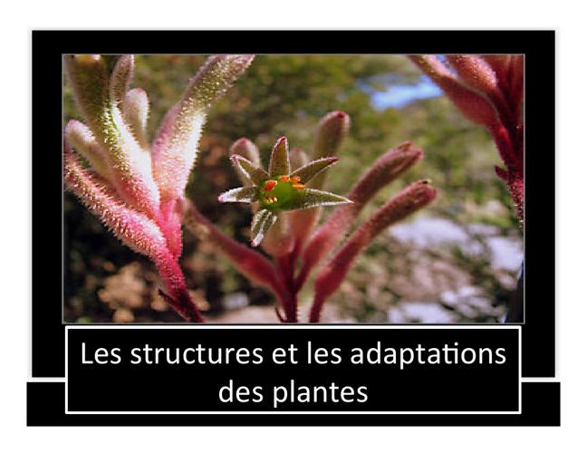 Theme 2 - Les structures et les adaptations des plantes