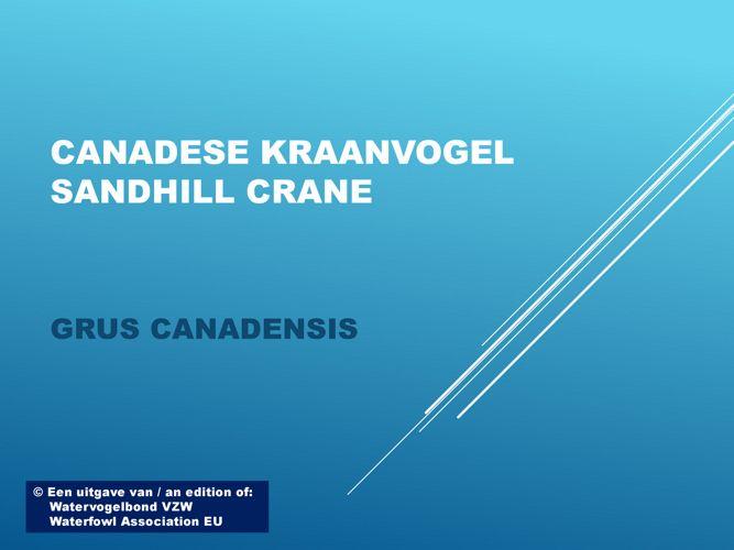Canadese kraanvogel - Sandhill crane