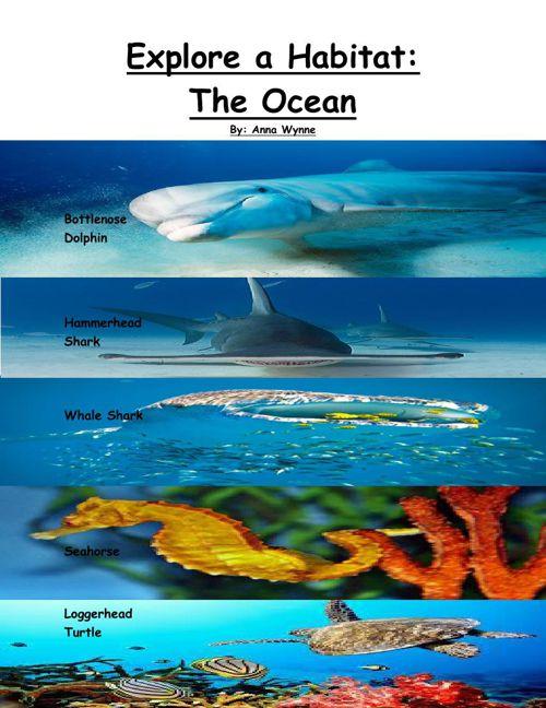 Explore a Habitat The Ocean