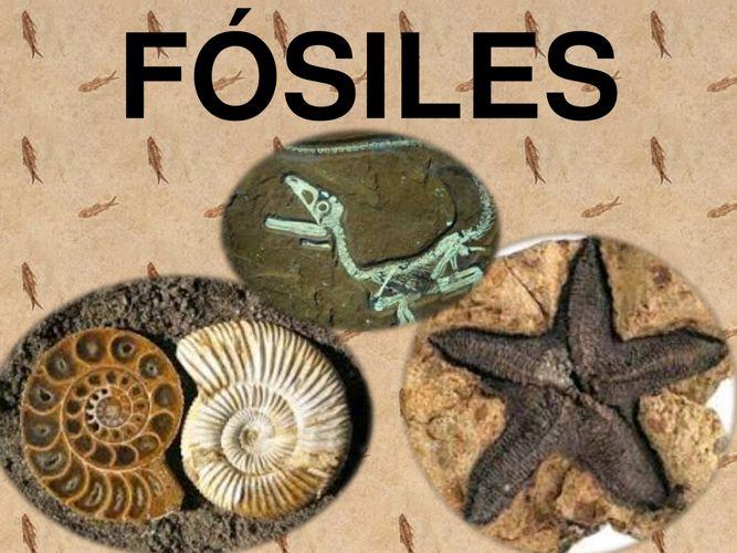 fosilesexpo1
